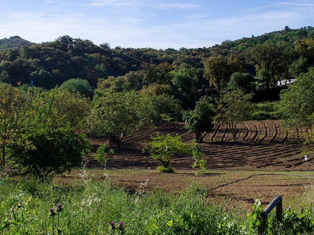 Huertas al salir de Aracena y tomar el camino hacia Corterrangel.