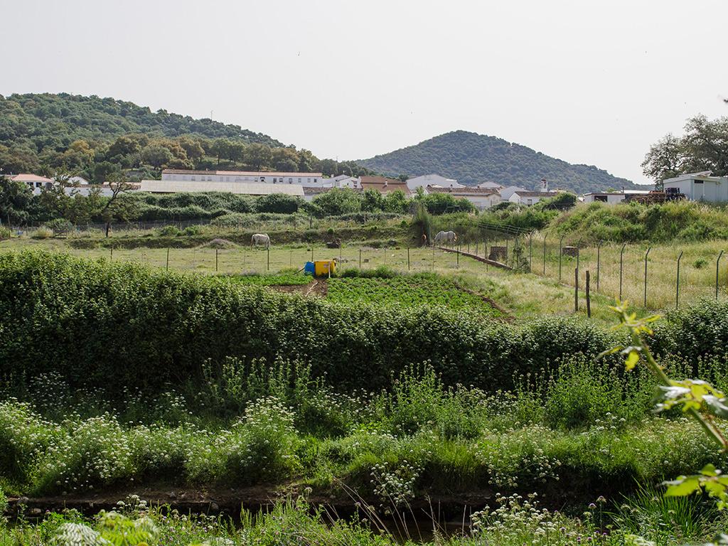 Huertas junto al Río Caliente en las cercanías de El Repilado.