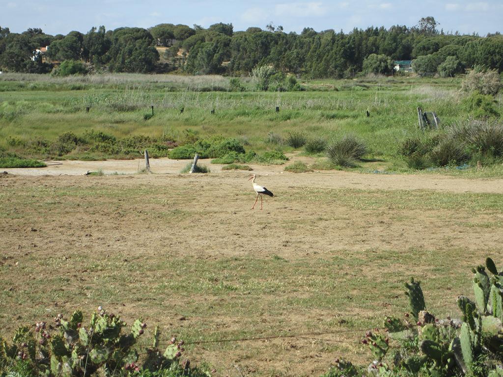 Cigüeña en el entorno del Arroyo del Prado