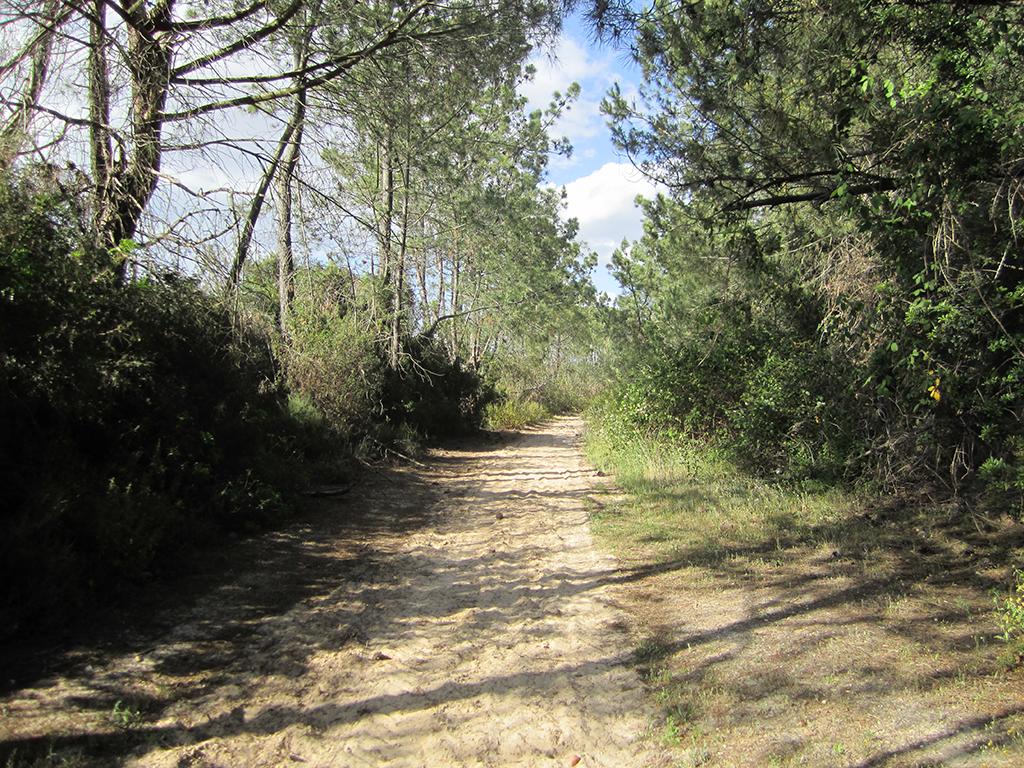 Vía Verde Litoral, tramo entre La Redondela y Lepe