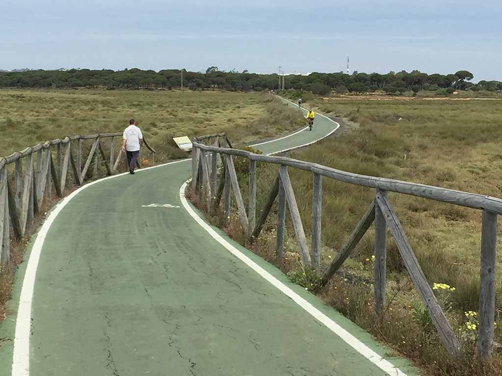 Carril ciclista/peatonal en las Marismas del Odiel