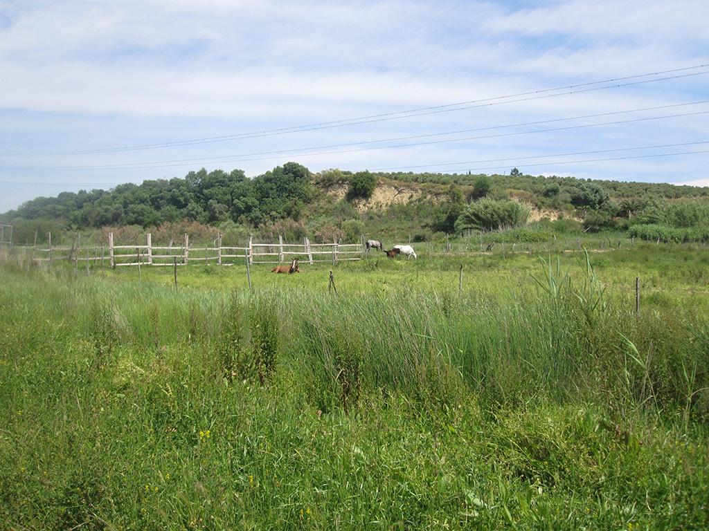 Pastos y caballos cerca de Moguer