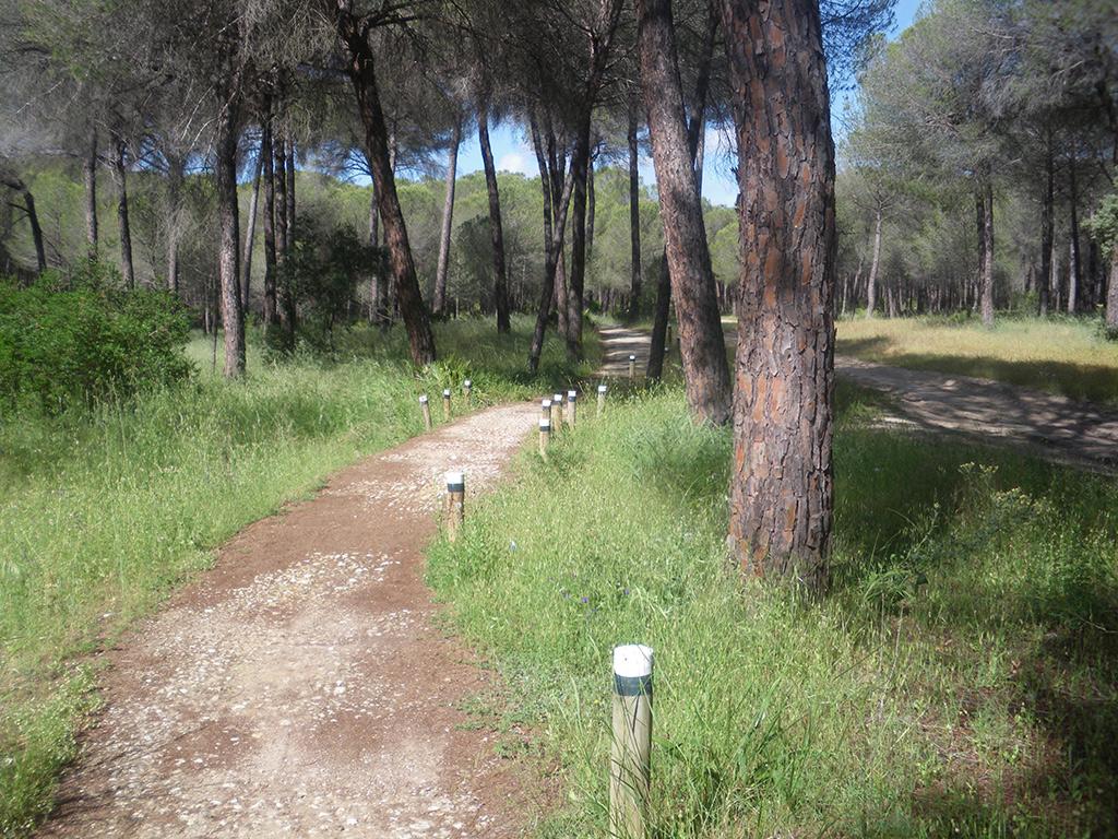 Carril bici entre los pinares
