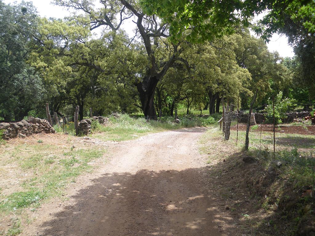 Alcornoques, encinas y castaños junto al camino